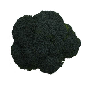 Broccoli supply can be whole or as broccoli florets. Broccoli stem can also be supplied.